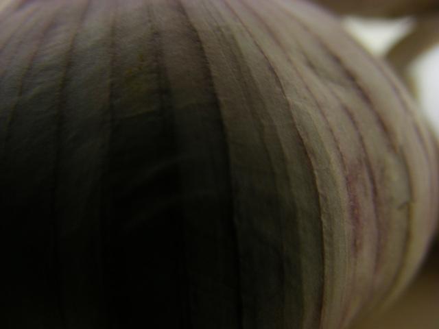 garlic02