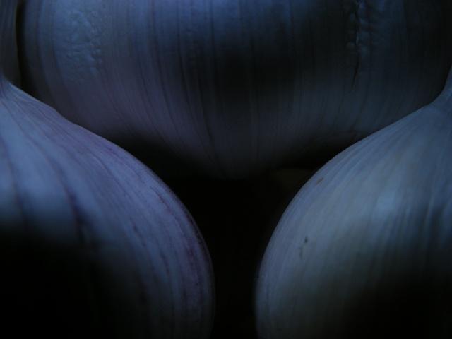 garlic03
